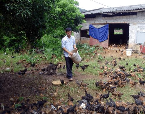 Có thể mua đất rừng ở Chí Linh để lập trang trại